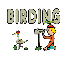 Birding or Birdwatching design shows a keen ornithologist observing a bird from afar. Meanwhile an exotic bird stands on his hat. Ornithology image for birdwatchers and birding enthusiasts.