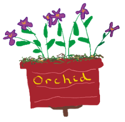 Orchid with purple flowers and green leaves, moss and a red pot with